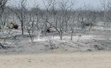 Incendios: en una semana, a un productor el campo se le redujo de 5000 a 500 hectáreas