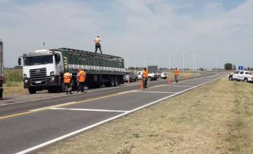 CPR Bolívar: Infracciones a camiones que transportaban animales vacunos en falta