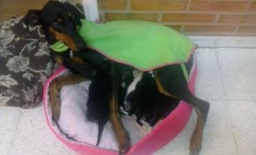 Ayudemos a ayudar, ese es mi lema: todos con Marisol y sus cachorritos