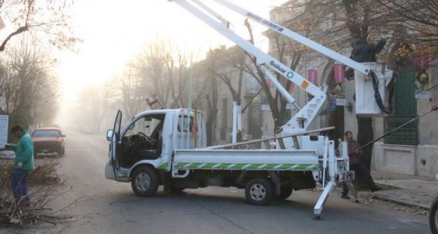 Ya se podaron alrededor de 500 árboles y se otorgaron 600 permisos