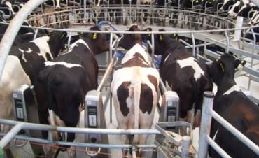 El Gobierno amplió el subsidio destinado a los productores lecheros