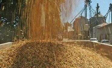 La molienda de oleaginosas creció 13,4% en los primeros siete meses del año