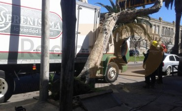 Incidente de tránsito: una planta cayó sobre un camión de reparto