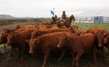 La hacienda se negoció con valores estables en el Mercado de Liniers