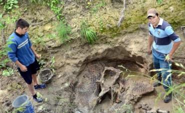 Encuentran un armadillo de más de 10 mil años